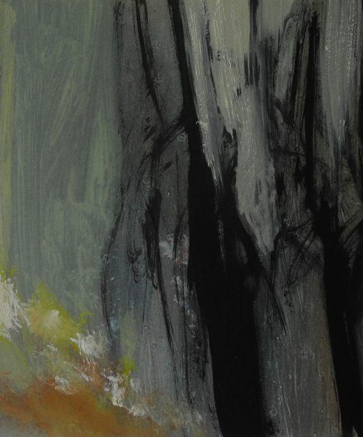 La luz del Bosque 13