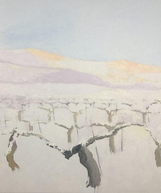 Viñedo invierno 11