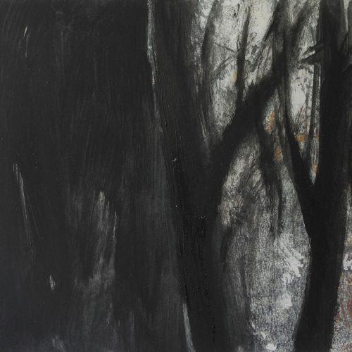 La luz del Bosque 15