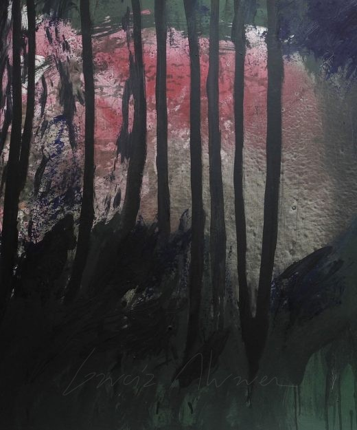 La luz del Bosque 01