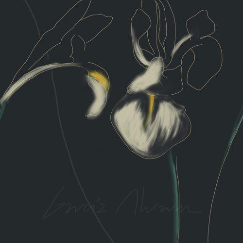 Flores 05