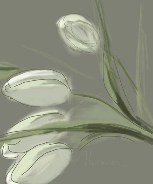 Flores 09