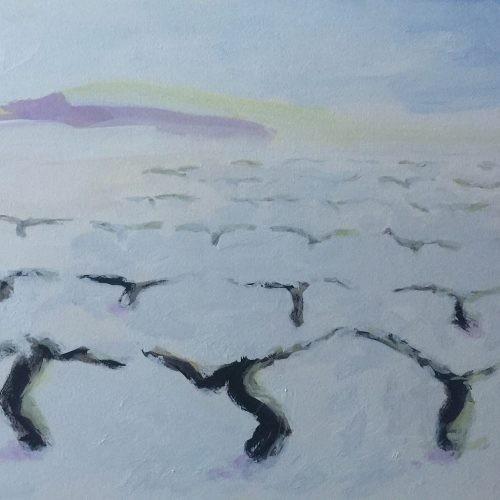 Viñedo invierno 17